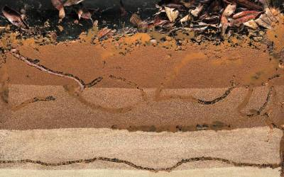 B is for Bioturbation