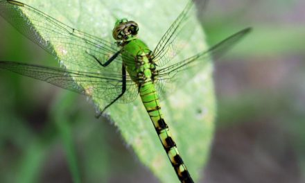 Three‐quarters of flying insects have disappeared, scientists say