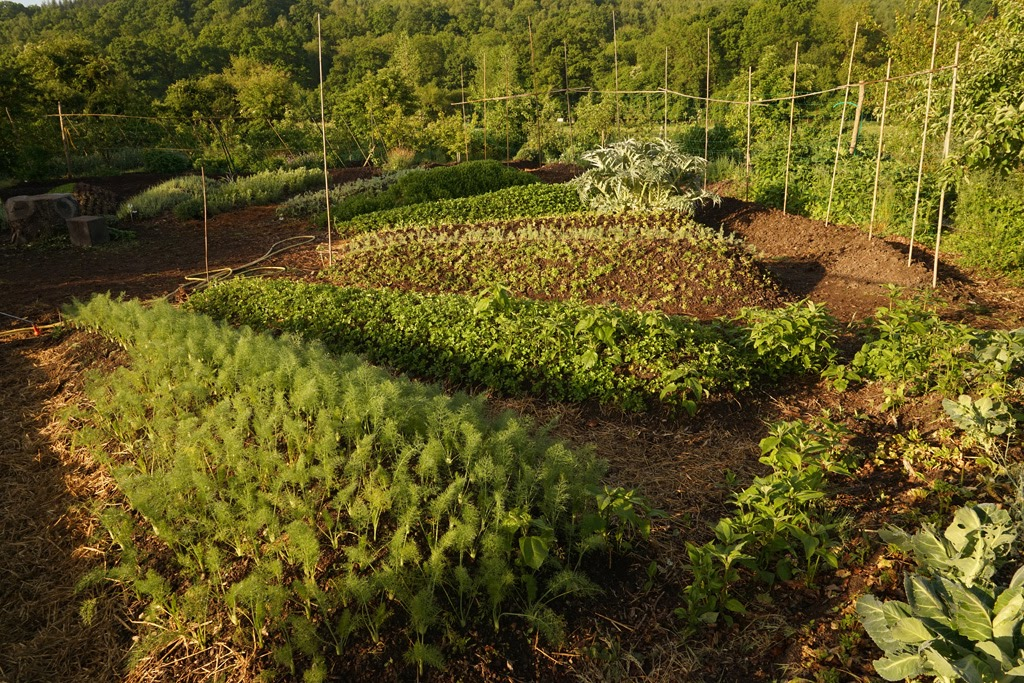 The mandala garden at Bec Hellouin. Photo: Frédéric Sauvadet.