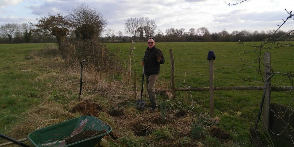 The newly planted south-west hedge