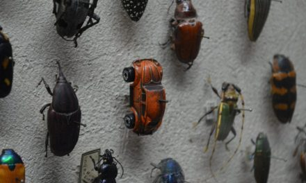 The Insect Apocalypse Is Here. What does it mean for the rest of life on Earth?
