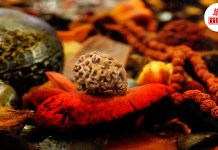 thebiharnews-in-rudraksha-and-its-benefits