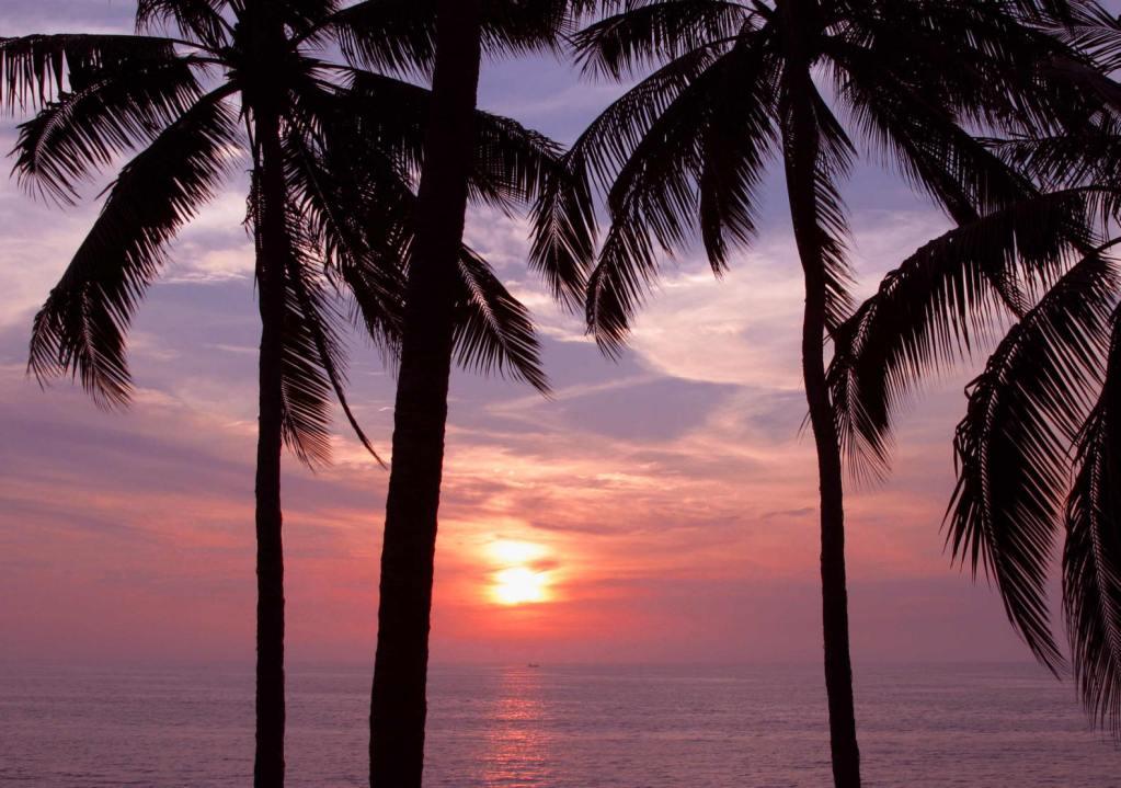Puerto Vallarta Sunset Palm Trees