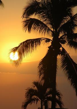 Sunset Puerto Vallarta romantic