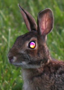 bunny rabbit with shiny eyes