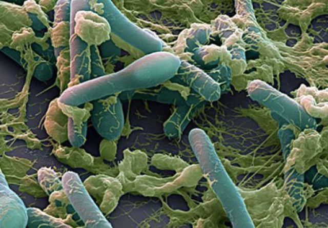 bacteria dna no code