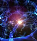 Neurons brain plasticity