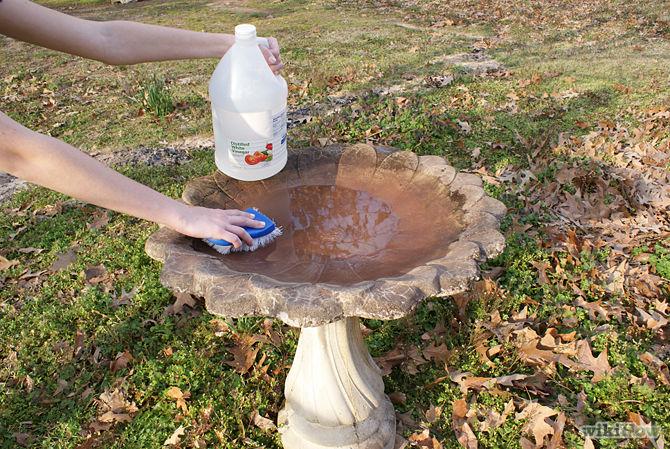 Image result for birdbath cleaning