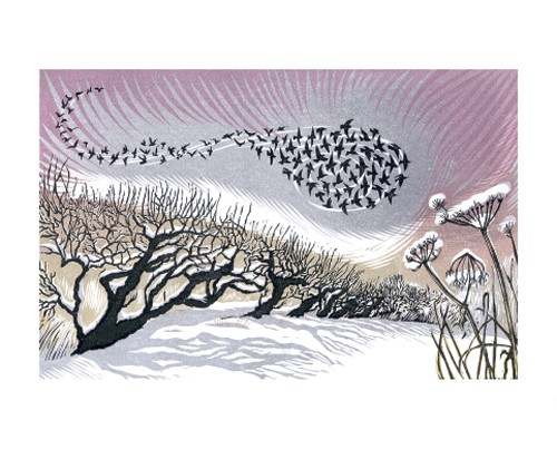 Midwinter Starlings By Niki Bowers A044w