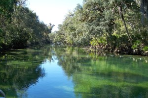 blue-springs-river-178624