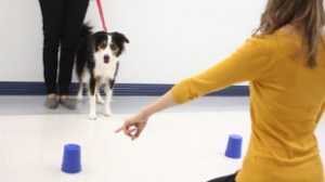 Dogs understand human pointing gestures