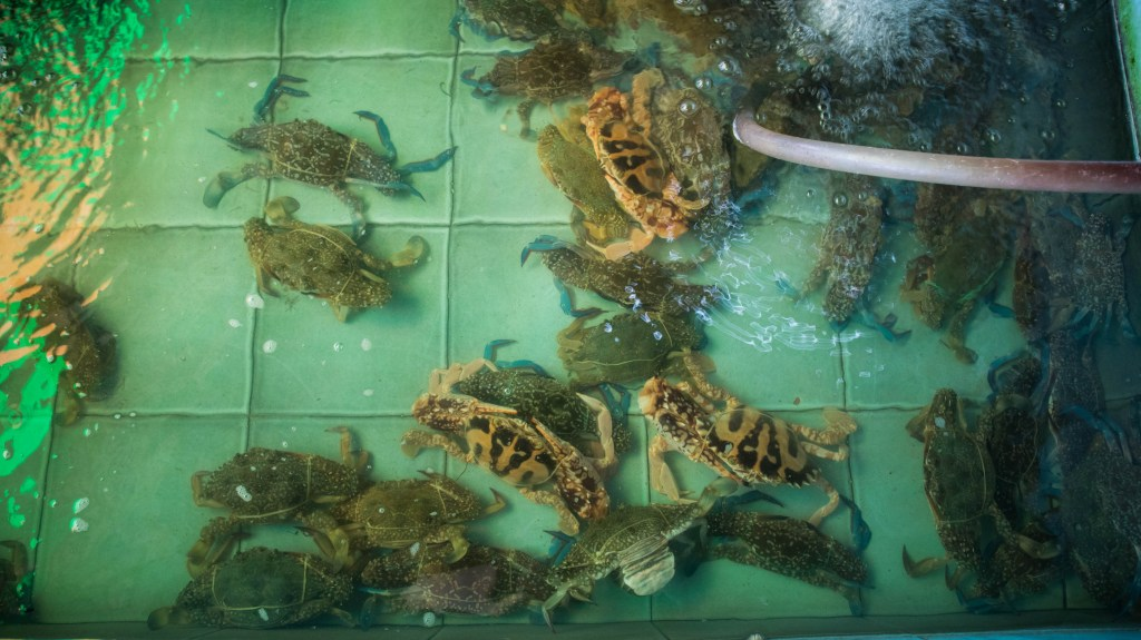 crabs in a pool in rayong