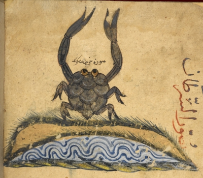 Aristotle_crab_Arab-400x350