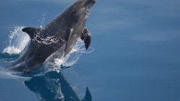 Human impact on Bottlenose dolphins in MPAs