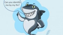 Shark Fin Guide, Shark Fin Identification, FAO,