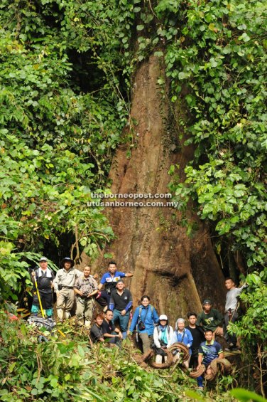 The expedition team with the tallest tree. Standing (from left): Maclean Bosumil, Dr Arthur Chung, John B. Sugau, Juanis Runcin (tree climber), Joel Dawat, Dr Joan T. Pereira, Eyen Khoo, Viviannye Paul, Jemson Jumian, Martin Tuyuk and Postar Miun. Sitting (from left): Marty Marianus, Markus Gumbilil and Hamzah Rusitin.