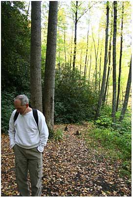 Preston in the Woods