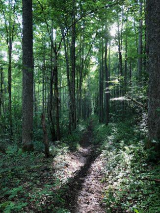 Hiking the Caldwell Fork Trail