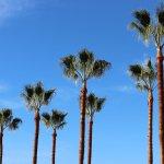 California blue sky - The BPc