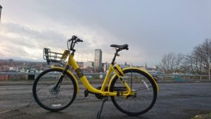 Yellow OFO bikes