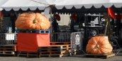 gpbf14-great-pumpkins
