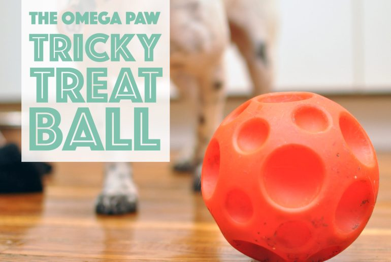 The Broke Dog: The Omega Paw Tricky Treat Ball Product Review
