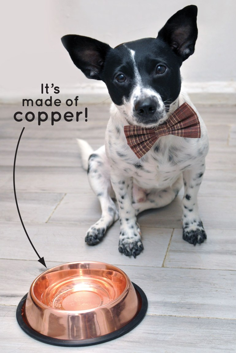 Your chance to win a CuBowl, an innovative new dog water dish made from antimicrobial copper!