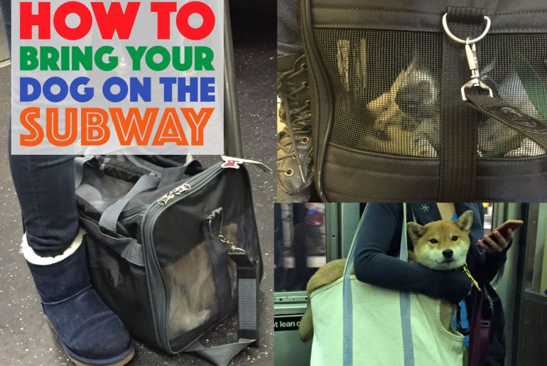 Having a car in New York City is expensive, not to mention a pain in the tush. When forced to travel with their dogs, many New Yorkers choose to take the subway. There is a right way and a wrong way to do this, however, especially if your dog stresses easily. Keep reading to learn how to bring your dog on the subway while following the law and assuring it's an easy trip for you, your dog, and your fellow passengers.