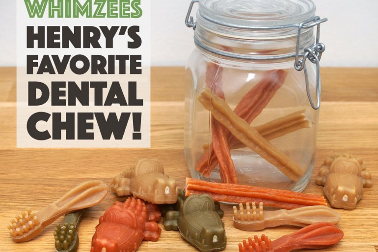 If I were to tell you that one of Henry's favorite snacks is completely vegetarian, would you believe me? It's true! Henry goes absolutely bonkers over Whimzees, dental chews made from natural ingredients that come in all sorts of colors, sizes, and shapes.