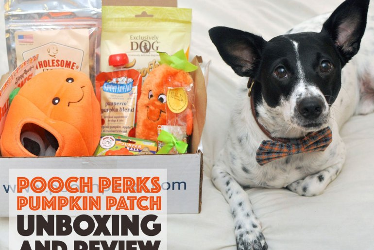 It's pumpkin spice season and now your pup can get in on the fun! Check out our October Pooch Perks Unboxing for a doggone fun fall.