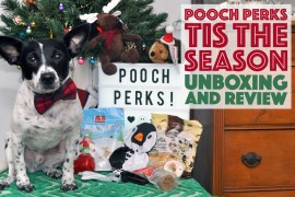 If your dog needs a little prodding to get in on the holiday fun, Pooch Perks is here to help —check out our December Pooch Perks review to learn how!