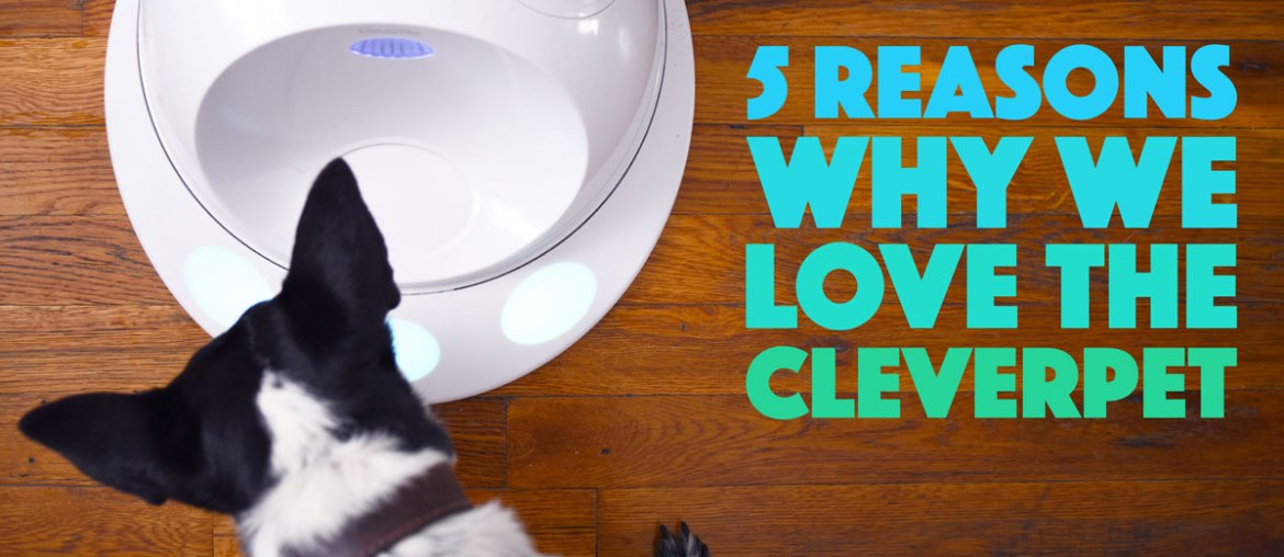5 Reasons Why We Love The CleverPet: Our CleverPet Review