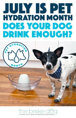 July is Pet Hydration Month, and we've teamed up with PetSafe® Brand to help keep your pets happy and hydrated! Do you know how much your dog should drink?