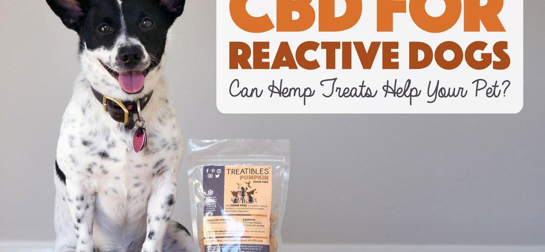 CBD For Reactive Dogs: Can Hemp Help Your Pet?
