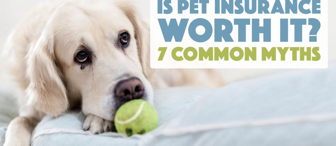 Is Pet Insurance Worth It? 7 Common Myths