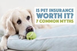 Is pet insurance worth it? Are you considering pet insurance, but have a few doubts? We're addressing seven of the most pervasive pet insurance myths and concerns.
