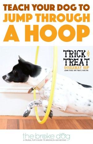 How To Teach Your Dog To Jump Through A Hoop