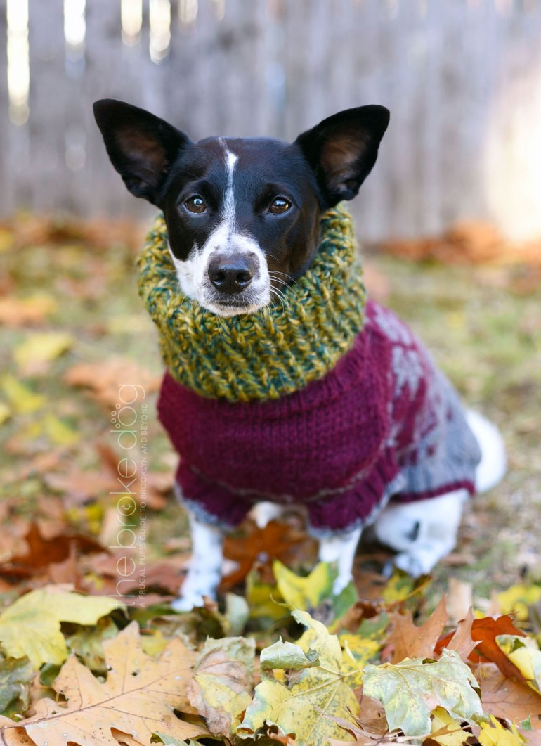 It's getting COLD outside! I don't know about your pup, but my Henry loves to wear this cozy cowl. It's super quick and easy to knit — it only took me an afternoon. Grab your needles, some yarn, and your dog and cozy up!