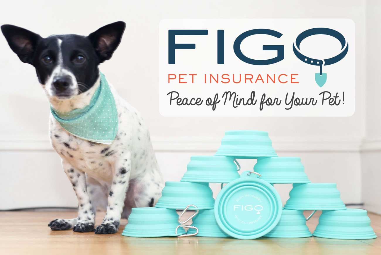 Figo Pet Insurance: Peace Of Mind For Your Pet - The Broke Dog