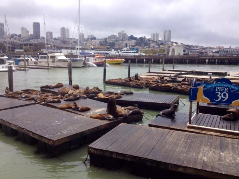 Sea lions in San Francisco.