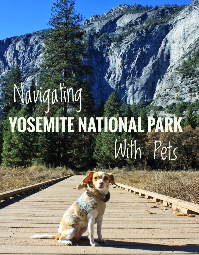 Yosemite National park dog