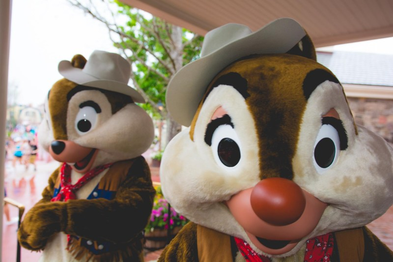 Chip & Dale - Renting DVC Points