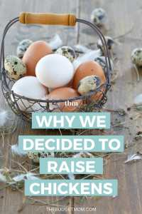 We decided to raise chickens to live a more sustainable life, to teach our son the responsibility of taking care of something, and to have more control over what we put on on the dinner table. Find out the benefits of raising backyard chickens and what it costs to get started.