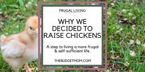 chicks,chickens,frugal living,eggs