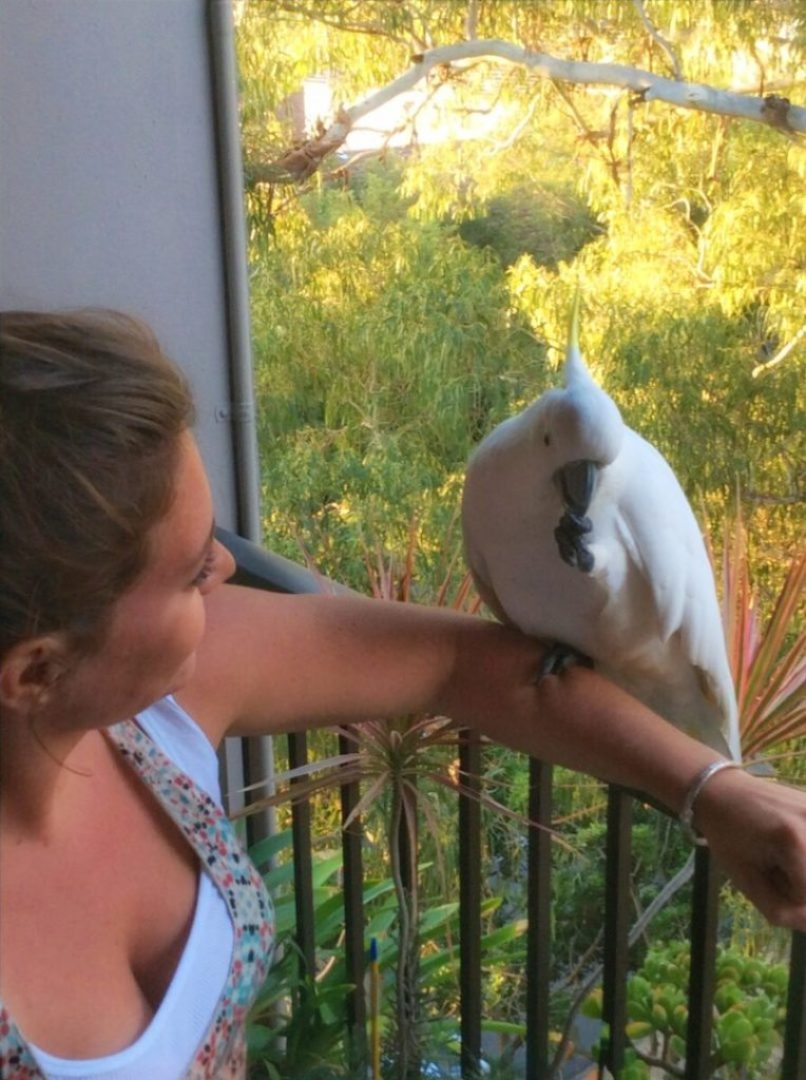 The wild cockatoos are so friendly that they'll climb right up on your arm...as long as you have a peanut!