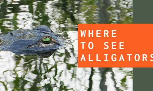 Best Places to See Alligators On Your Florida Vacation