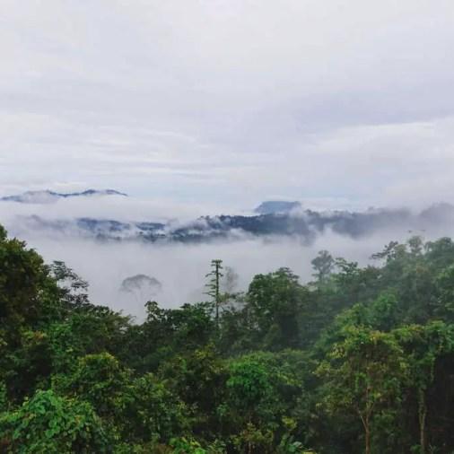 Borneo Sabah morning mist