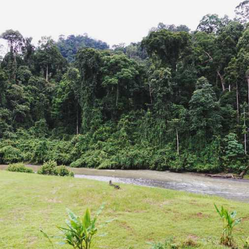 Exploring Borneo Island Borneo Rainforest Lodge View from Cabin