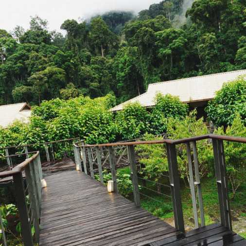 Exploring Borneo Island Borneo Rainforest Lodge
