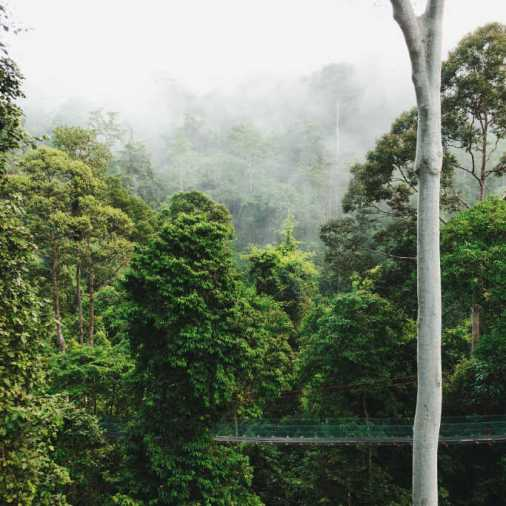 Exploring Borneo Island World's Tallest Trees